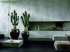 cactus interior design easy to care for cactus cactus living room #interior #cactus #plant