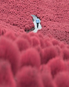 Colorful Autumn in Japan: Landscape Photography by Daisuke Uematsu