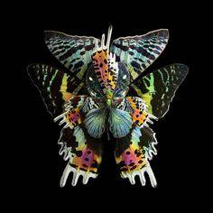 blooms of butterflies wings