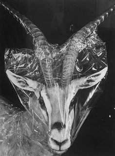 FFFFOUND! | Images from a Natural History Museum « #mask
