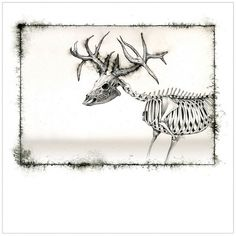 Deer Skeleton #illustration #skeleton #verkamp #ashley