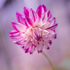 Hisashi Suga Captures The Beauty of Japan's Brilliant Wildflowers