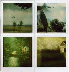 The Collective Loop #vintage #photography #nature #ed fella #polariod