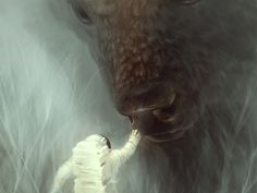 Encounter #illustration #buffalo