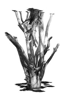 Rupert Smissen #white #tree #sparse #black #twigs #illustration #natural #nature #and #branches #drawing