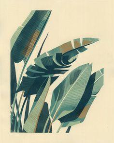 illustration #banana #bird of paradise #palm #plant #leaf #frond #botany