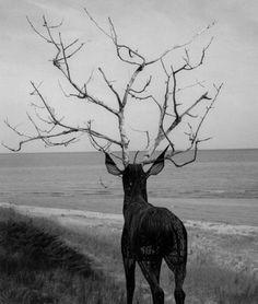 Junk Funk #antlers #deer #sculpture #white #tree #installation #design #black #landscape #stag #nature #photography #art #and
