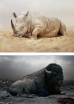 Until The Kingdom Comes: Animal Portraits by Simen Johan #rhino #photography #portrait #buffalo #animal