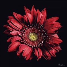 Fine Art Flower Photography by Cristiane Teston