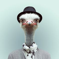 Animals Portraits by Yago Partal | Cuded #portraits #partal #yago #animals