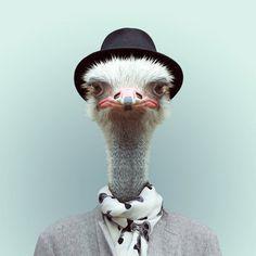Animals Portraits by Yago Partal | Cuded #portraits #partal #yago #animals