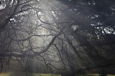 Light under the trees 02 #shadows #smoke #sunlight #light #trees
