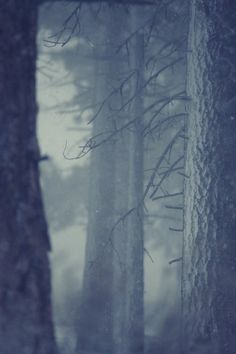 Snow in forest | Flickr - Photo Sharing! #forest #coreyholms #snow