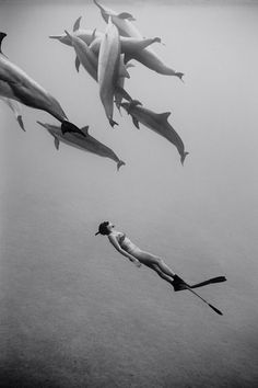 fish, scuba diver #under water #photography #black and white