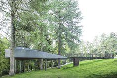 treesnakehouse-8 #architecture #house #tree