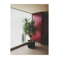 Yosigo: Diary #yosigo #plant