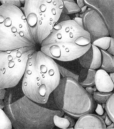 10+ Beautiful Flower Drawings for Inspiration #inspiration #drawings #flower