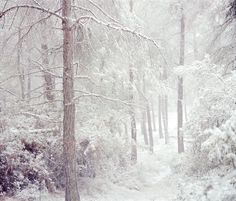 In the woods on Behance #winter