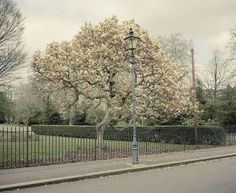 Sprung — Tom Hull — Photography #photography #spring #tom hull #sprung