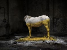 Anthropocene on the Behance Network #yellow #paint #photography #horse