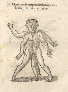 000503 #naturalism #aldrovandi #illustration #latin #ulisse #monster #drawing