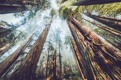 an-adventurers: Redwood, California