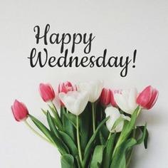 - Good Morning Wednesday