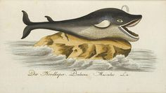 photo #whale #ballena #ilustracin #illustration #vintage