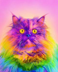 Ramzy Masri Turns The World Into a Rainbow Paradise 7 Ramzy Masri Turns The World Into a Rainbow Paradise