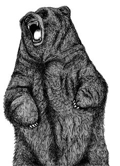 The Sixteenth Division #bear #drawing #sketch
