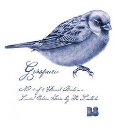 Graaspurv_blaa.png 670×746 pixels #grspurv #fie #danish #bird #lindholm #birds
