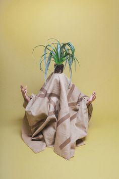 JARDxc3x8d BOTxc3x80NICrnPINK MORRO #photo #palmtree