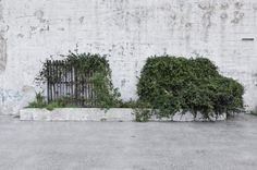 © Maxime Tetard #vegetal #car