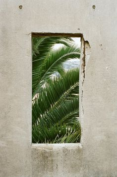 Claudio Troncoso Rojas © #photography #concrete #palm