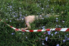 The body of one of the passengers lays near the crash site of the MH17, Malaysia Airlines flight, which crashed while flying over Donetsk