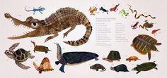 Brendan Wenzel → childrens #illustration #animals