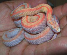 DeadFix » snake