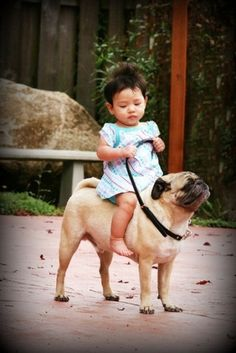 Jess Erickson's Photos - Wall Photos #burden #beast #photo #of #baby #pug