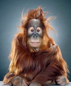 Screen-shot-2011-02-03-at-09.53.30.png 639×777 pixels #photography #monkey
