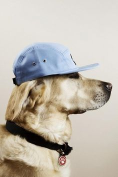 Dogs with caps | Cuded