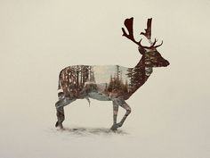 Double-Exposure Animal Portraits By Norwegian Photographer #photography #nature #animal