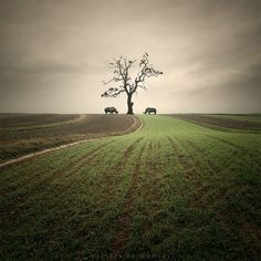 Photo Manipulations by Leszek Bujnowski » Creative Photography Blog #surreal #photography #manipulations