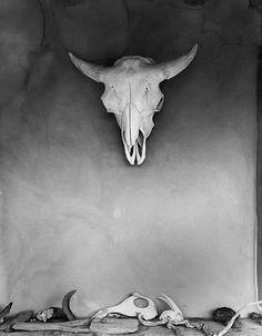 bones on bones #skull #buffalo