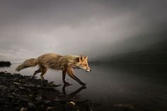 2014 National Geographic Photo Contest – photo by Jonathan Armstrong