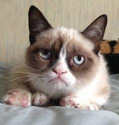 Grumpy Cat Imgur #ref