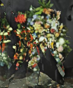 Ori Gersht | PICDIT #photo #design #photography #art #flower