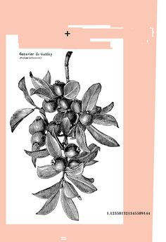 marchbank.us 1.12 #poster #design #plant #plus