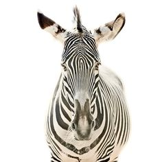 Animal Portraits on the Behance Network #photography #animal #portrait
