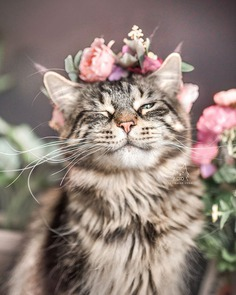 Cute Flower Crowns For Animals 2 This Artist Is Making Flower Crowns For Animals And They Look Majestic