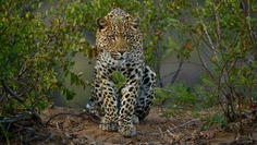 Astonishing Wild Animals Photography in Africa by Steven Dover
